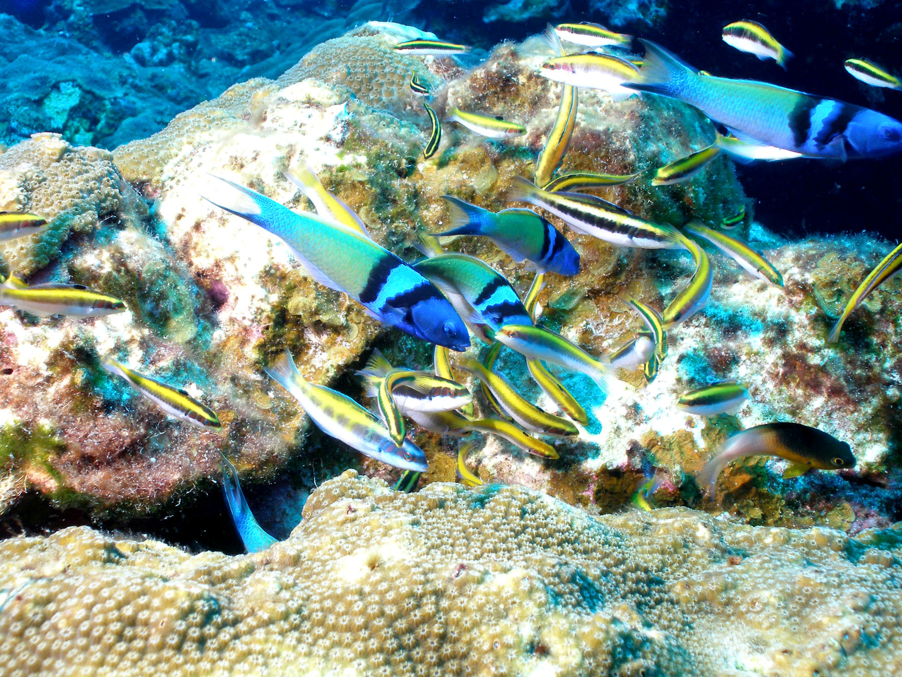 fishes of flower garden banks national marine sanctuary