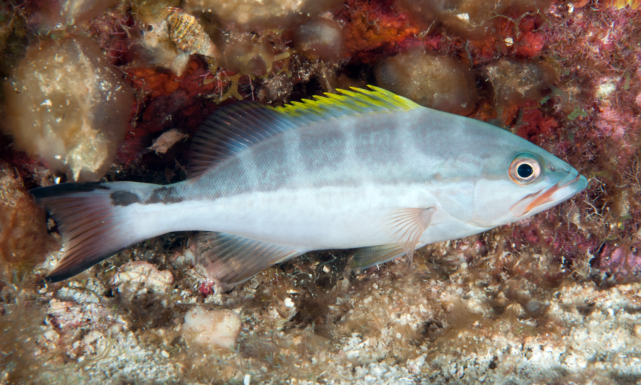 Fishes of Flower Garden Banks National Marine Sanctuary ...