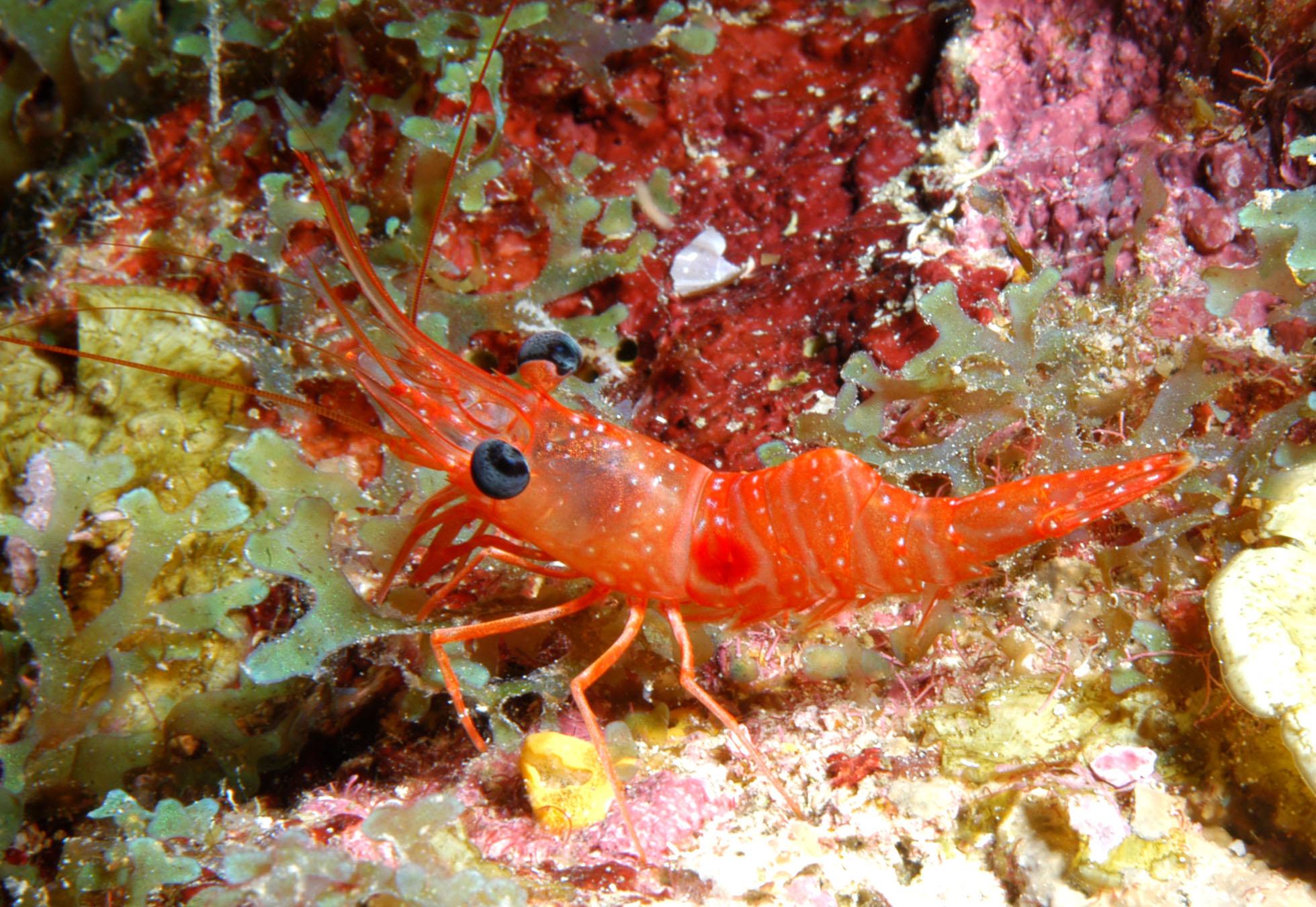 Crustaceans of Flower Garden Banks National Marine Sanctuary