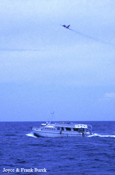 A play flying above a dive boat in the sanctuary