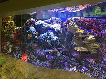 View of the Flower Garden Banks exhibit in the Aquarium at Moody Gardens