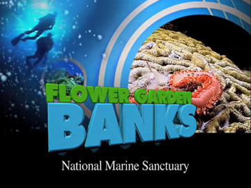 Opening screen shot from video about sanctuary, showing divers, bubbles, brain coral and a bristle worm