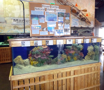 Coral reef tank with messaging about the Flower Garden Banks sanctuary