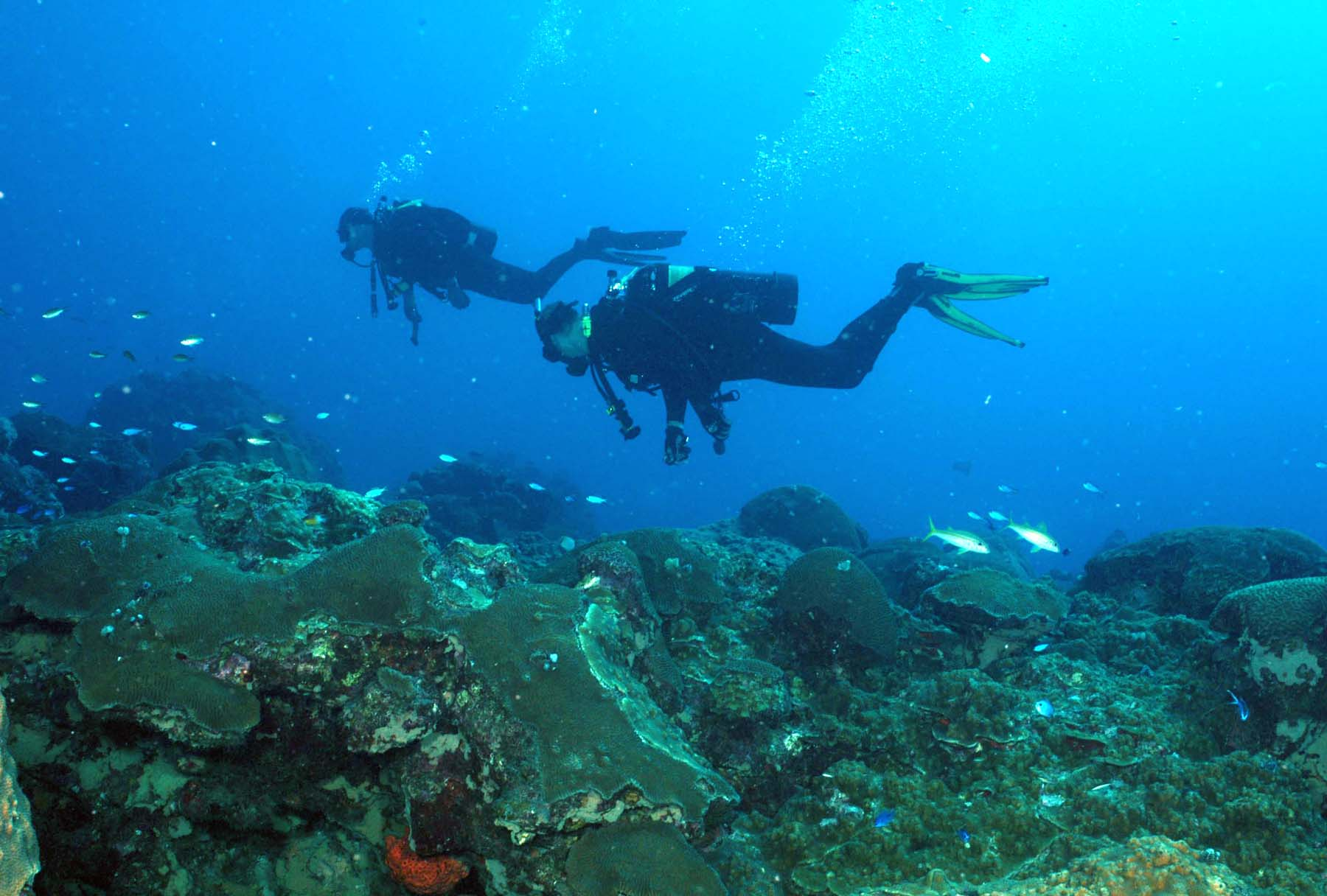 Genial Two Scuba Divers Swimming From Right To Left Above A Coral Reef. Trails Of  Bubbles