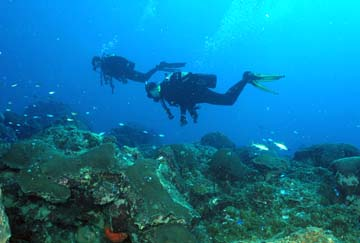 Two scuba divers swimming above a reef.