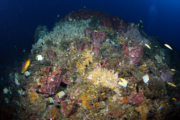 Reef scene dominated by algae and sponges