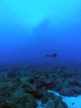 Diver floating above expanse of reef
