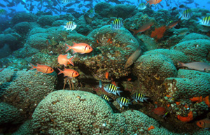 Coral reef swarming with fish