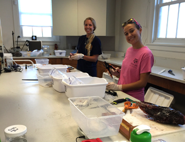 Two Texas A&M Galveston students helping with lionfish dissections