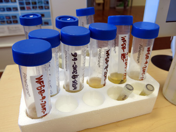 Larger vials containing fish samples taken from lionfish stomachs