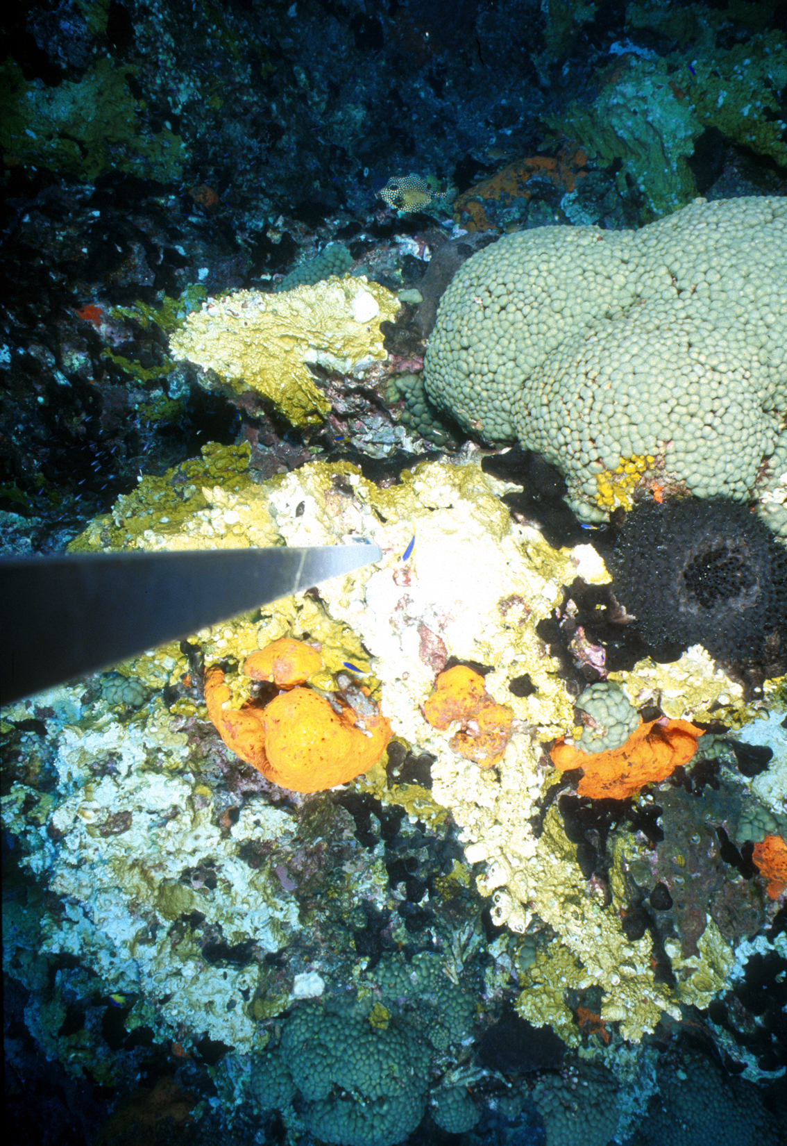 Flower Garden Banks National Marine Sanctuary Stetson Bank Monitoring Images