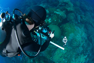 Looking over the shoulder of a diver taking a monitoring photo of the reef.