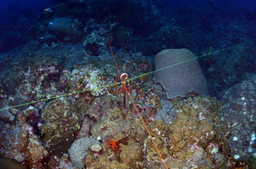 A metal eye-bolt embedded in the reef with one green string and one red string creating quadrants. One string lies east/west and the other lies north/south.