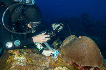 Diver positioning a camera pole in a metal keyhole template bolted to the reef near a brain coral colony
