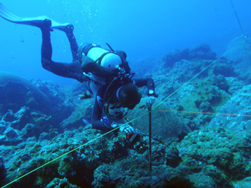 A diver holding on to a large metal stake at the midpoint of one side of a study site.  A measuring tape runs past this stake to the corners of the site.
