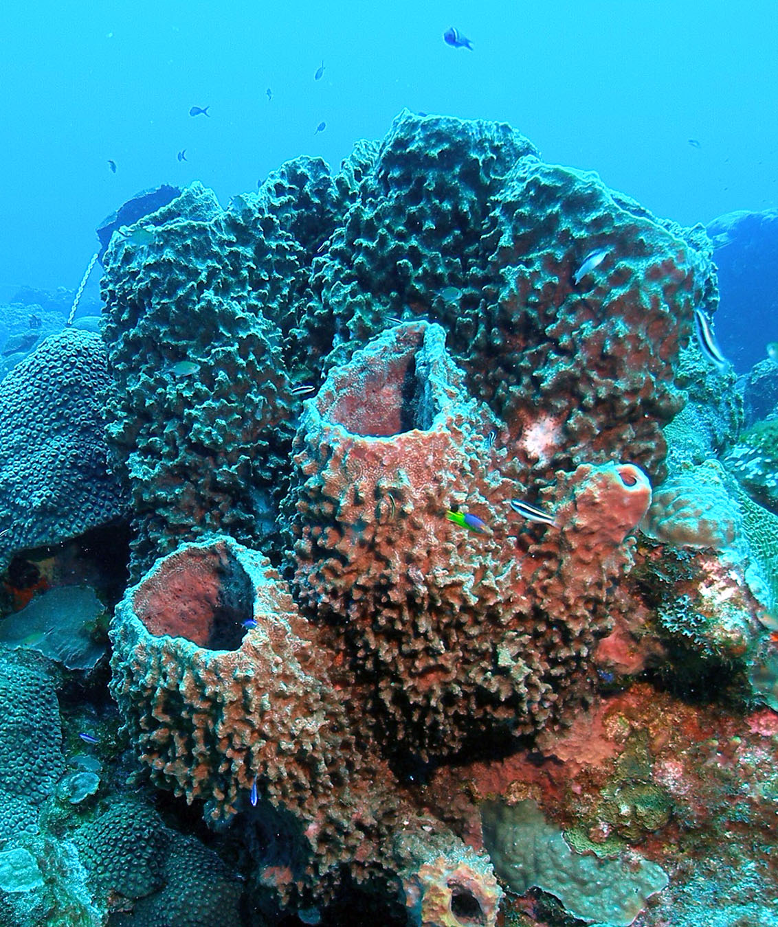 sponges of flower garden banks national marine sanctuary