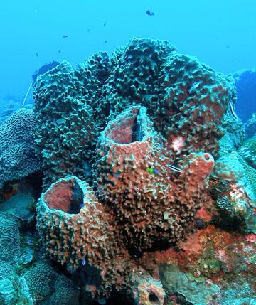 Sponges Of Flower Garden Banks National Marine Sanctuary