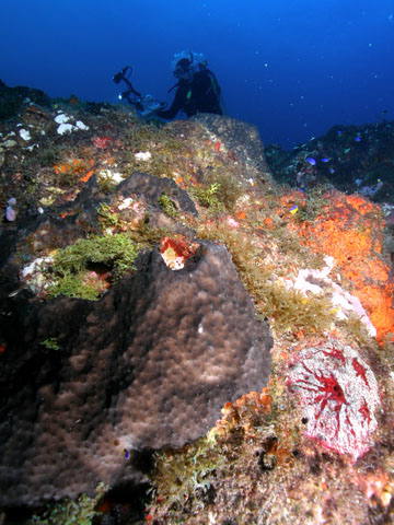 A reef outcropping covered in several different kinds of sponges.  Some are black, some are red and white, some are orange.  A diver with a camera is visible just behind the outcrop.