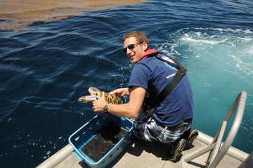 A man releasing a sea turtle from the back platform of a boat