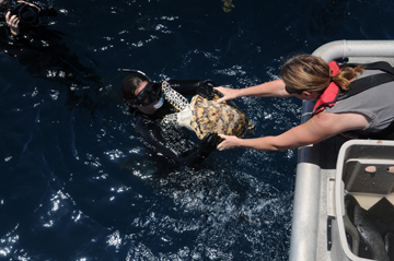 Woman on boat handing a sea turtle to a woman in the water