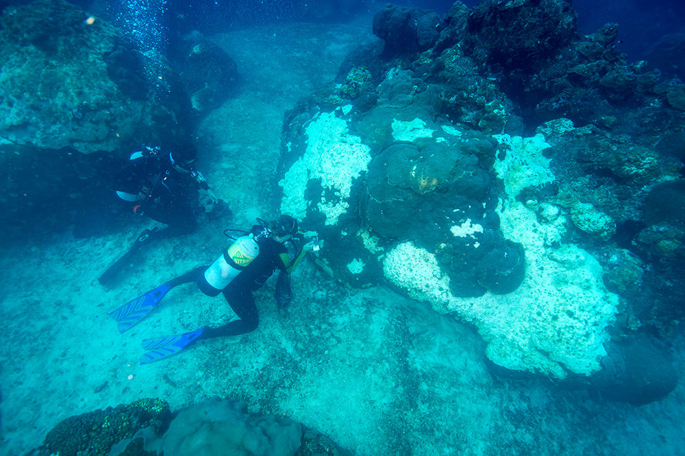 Two divers kneeling in a sand patch taking samples from nearby corals.