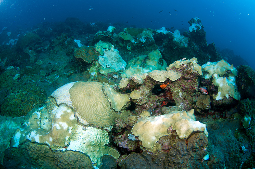 Varying levels of bleaching visible in coral colonies across the reef