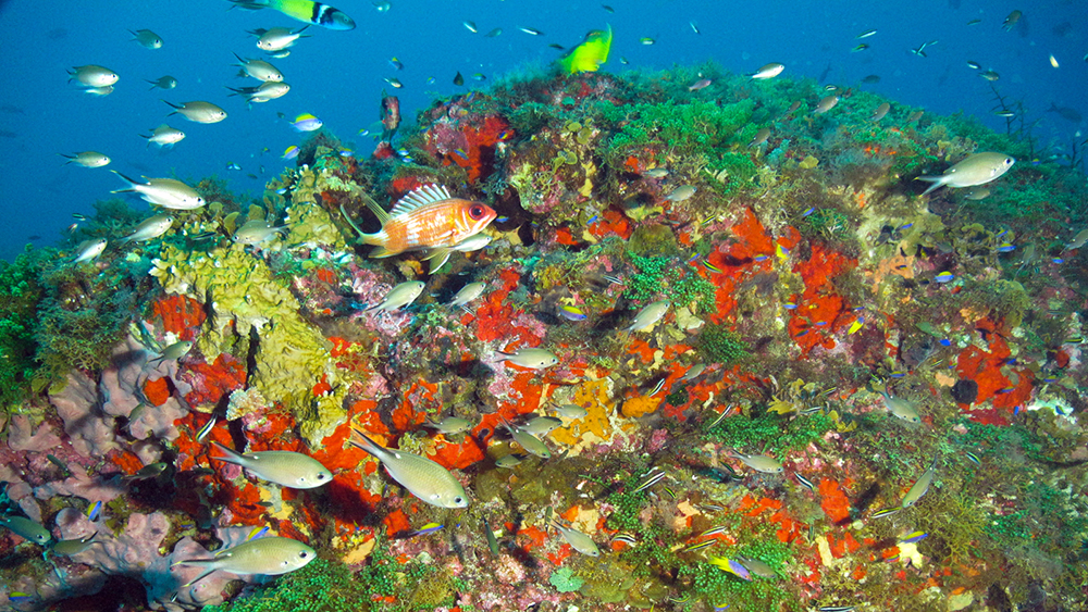 Colorful reef scene with orange sponges, green leafy algae, yellow fire coral and tropical fishes