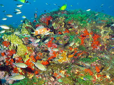 Fish, corals, algae at Bright Bank