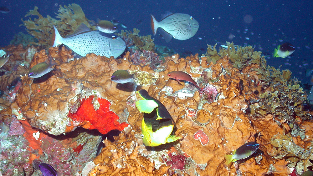 A variety of colorful tropical fishes swim around a section of reef covered in orange fire coral