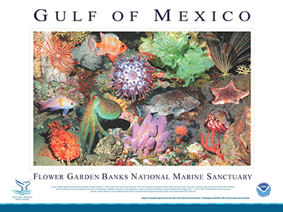 Poster with a large photo collage of deep reef plants and animals in the middle and a description of their habitats underneath