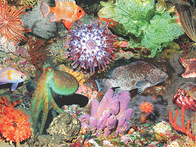 Collage of plants and animals found in the deep reefs of FGBNMS