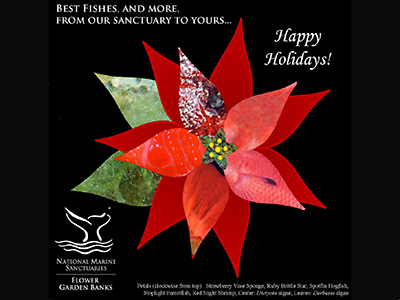 A poinsettia image with some of the red bract and green leaf parts replaced by sanctuary creature/plant images of the same colors, with a Happy Holidays message.