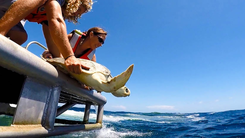 A woman and a man releasing a sea turtle into the ocean from the back platform of a boat