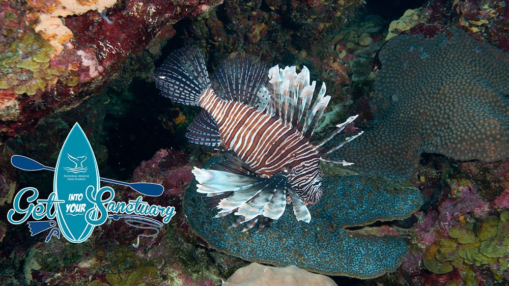Get Into Your Sanctuary logo overlayed on an image of a lionfish with fins flared