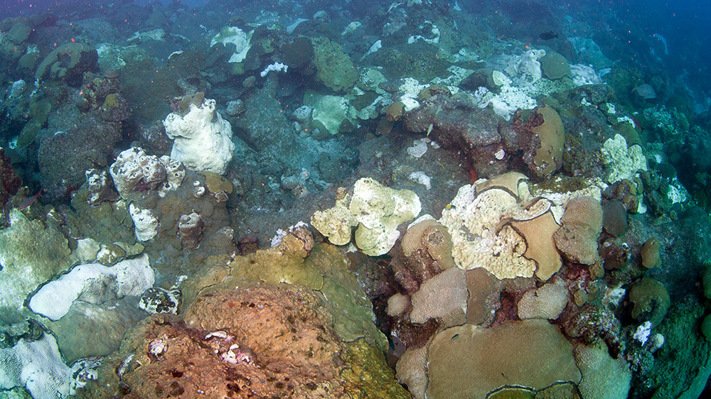 Overhead view of reef with extensive coral bleaching