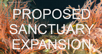 Proposed Sanctuary Expansion written over image of bright orange gorgnians. Links to Proposed Sanctuary Expansion page.