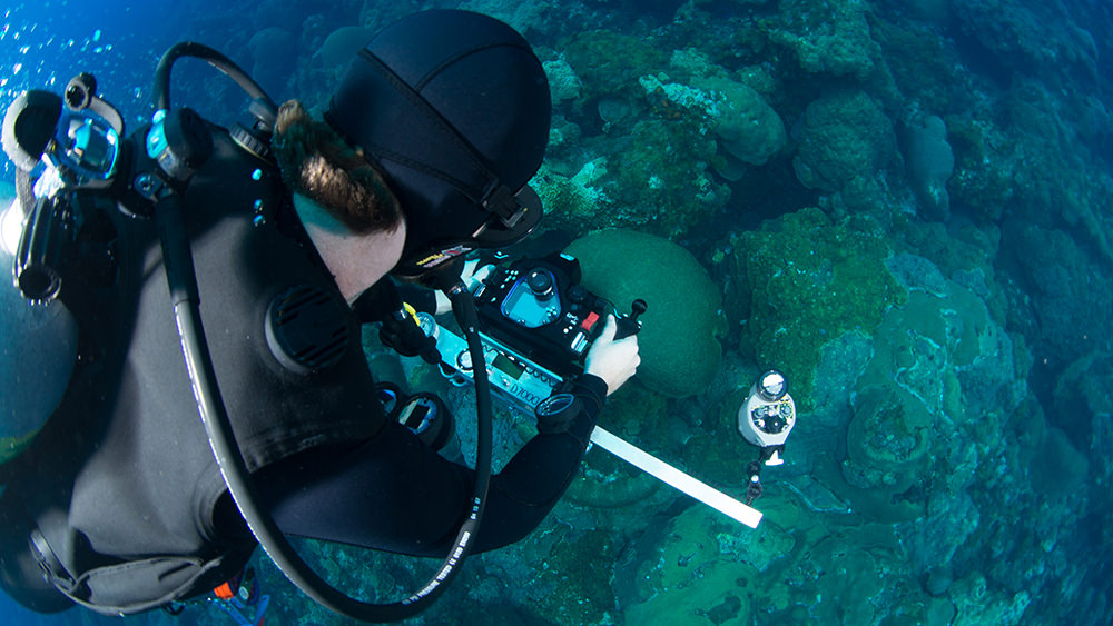 Looking over the shoulder of a diver taking a photo on the reef