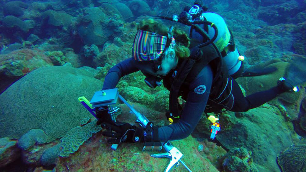 A diver installing a scientific instrument on the reef.