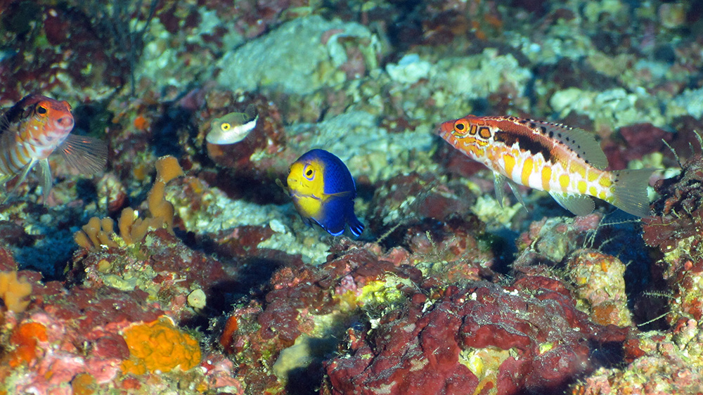 Colorful reef fish that are all looking intently toward the camera