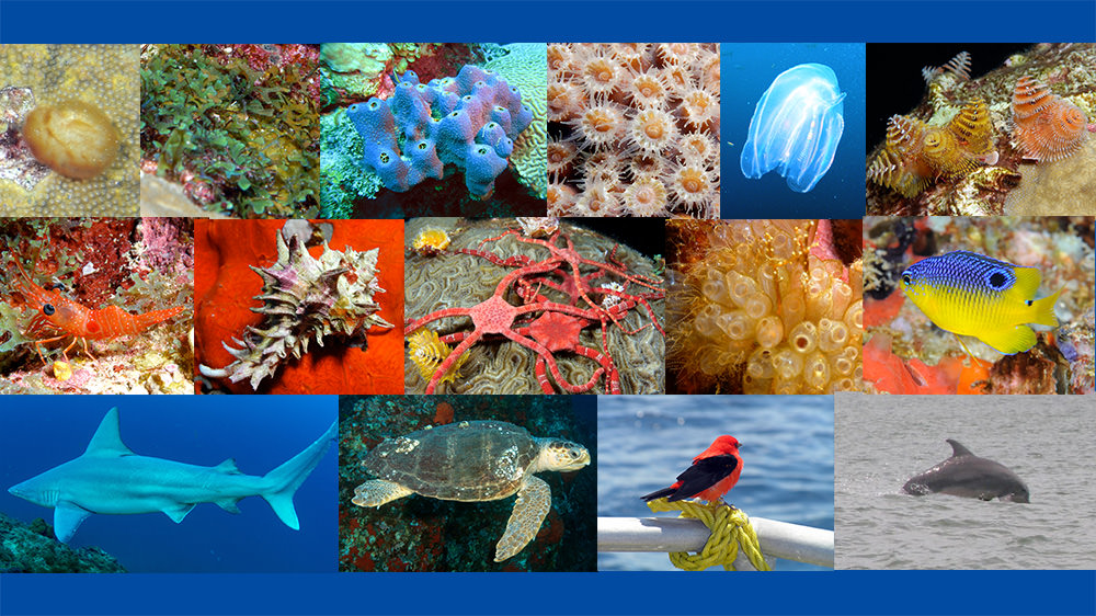 Collage of species images