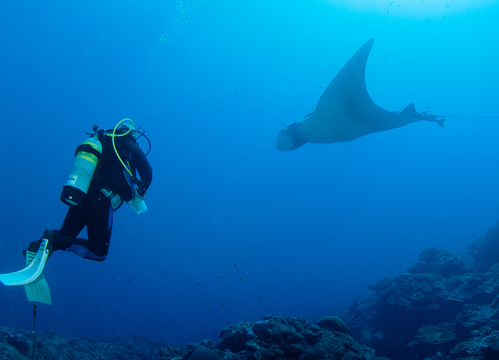 A diver hovering above the reef watching a manta ray swim by to his right