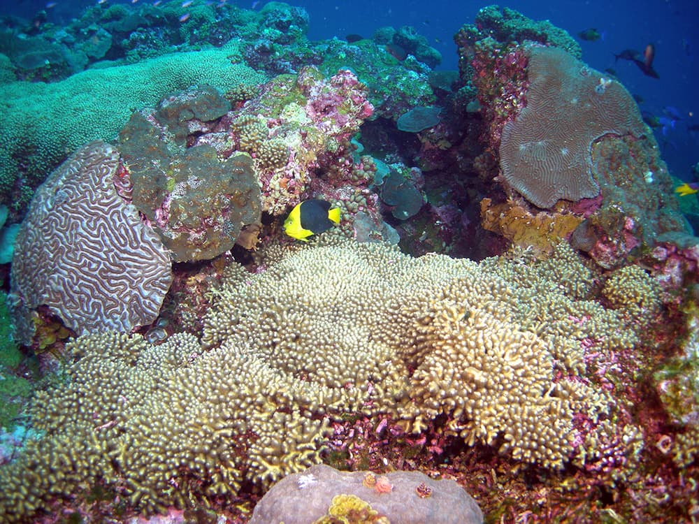 Colorful fish, corals and sponges on the reef at the Flower Garden Banks