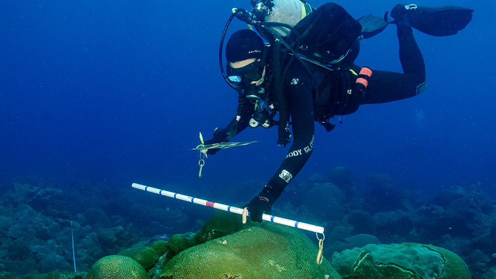 Diver swimming over a reef holding a piece of PVC pipe out in front to estimate coral sizes