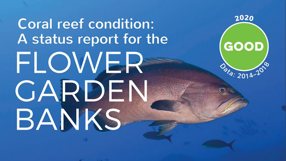 Grouper and a few small fish in blue water as backdrop for words - Coral reef condition: Good. A status report for the Flower Garden Banks
