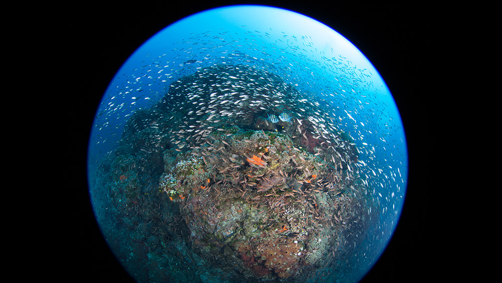 Fisheye view of fish swarming around a reef crest at Stetson Bank