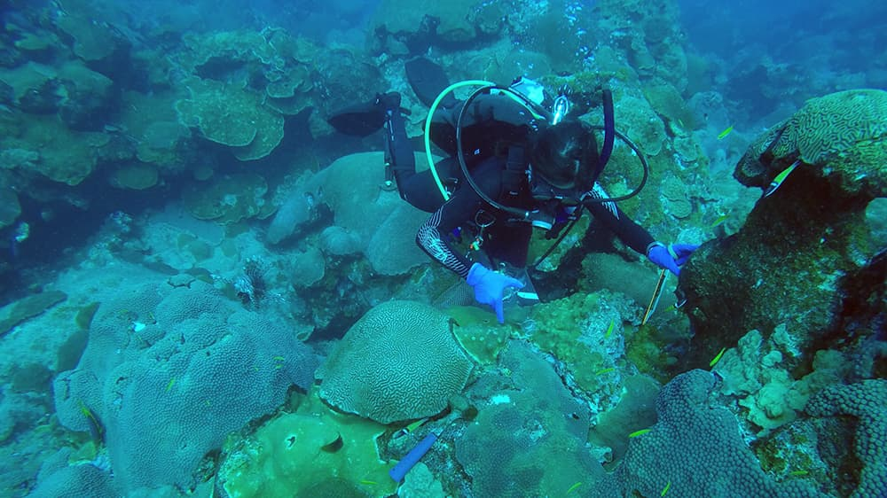 Adrienne Correa collecting samples from the reef.